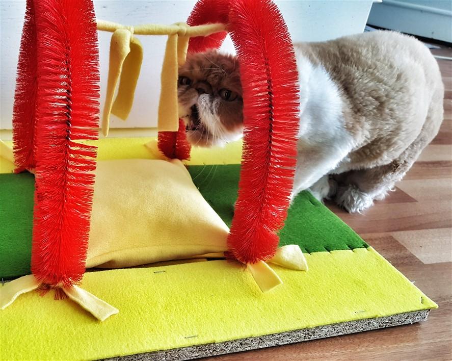 Kedi Tırmalama Tahtası ve Kaşınma Fırçası nasıl yapılır?